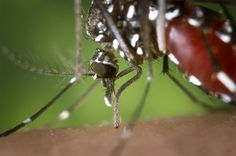 MadalBo: El mosquito tigre ha venido para quedarse