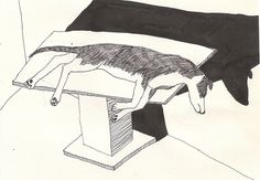 Dead dog by Marjolein Verbruggen, via Flickr