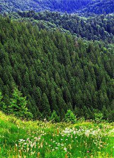 Romanian landscape