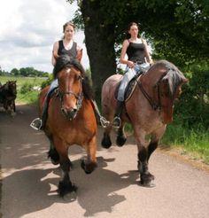 Auxois horses