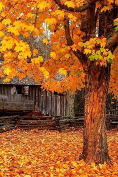Image shared by FX. Find images and videos about photography, autumn and fall on We Heart It - the app to get lost in what you love. Fall Pictures, Fall Photos, Funny Pictures, Autumn Scenes, Samhain, Mabon, Belle Photo, Fall Halloween, Autumn Leaves