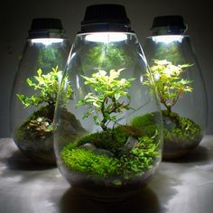 49 best terrariums worlds in a fish bowl images on moss terrarium plants indoor