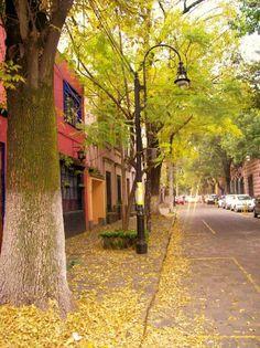 Caminando por las callecitas del barrio de Coyoacan en Ciudad de México, uno no se imagina estar dentro de una ciudad tan grande y bulliciosa como el DF.