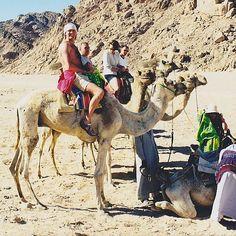 #holidays #Egypt #desert #fun #camelride #camelpose #cameltoes #camelbackmountain #cameltoetuesday #camelot #camelsafari