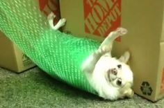 This Dog Is How You Feel Right Now