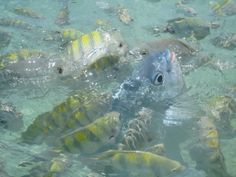Fish frenzy while snorkeling at Isla Mujeras off the coast of Cancun.