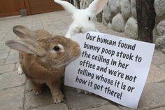 More Bunny Shaming (16 pics) | Mommy Has A Potty MouthMommy Has A Potty Mouth