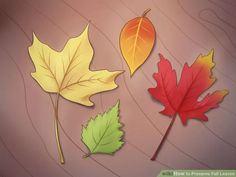 Image titled Preserve Fall Leaves Step 18