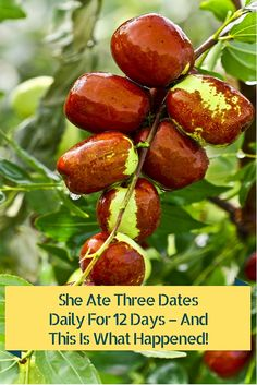 DADeLS-Beside their sweet and delicious taste, dates are an excellent source of vitamins and minerals which can boost your energy and provide you with a number of health benefits. Jujube Tree, Jujube Fruit, Health Articles, Health Tips, Health And Wellness, Health Benefits, Natural Cures, Natural Healing, Herbal Remedies