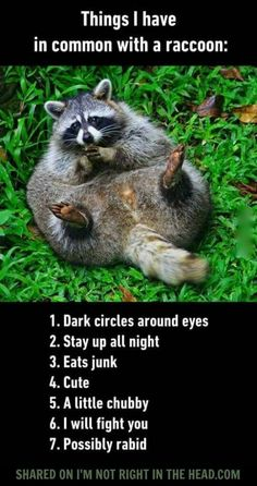 I never realized it til now but I am actually a raccoon