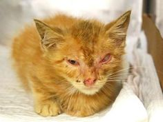 ***TO BE DESTROYED 09/02/16*** DUSTIN NEEDS URGENT MEDICAL FOR HIS EYE BUT THE…