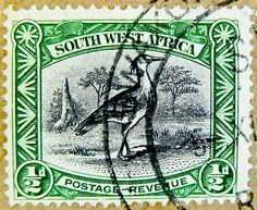 stamp South West Africa 0.5d 1/2D stamp postage revenue SWA (Namibia) Kori Bustard, Outarde kori, avutarda kori, Riesentrappe (Ardeotis kori) Suidwes-Afrika Southwest Africa 1/2 d Suidwes Africa bollo francobolli timbre почтовая марка 邮票 yóupiào γραμματόσ   by thx for sending stamps :) stampolina