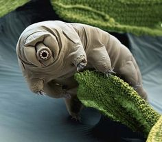 Top 10 Most Astonishing Electron Microscope Pics In The WorldYou can find Electron microscope and more on our website.Top 10 Most Astonishing Electron Microscope Pics In . Weird Creatures, Sea Creatures, Super Pouvoirs, Suspended Animation, Cute Nicknames, Human Dna, Electron Microscope, Cute Animals, Unusual Animals