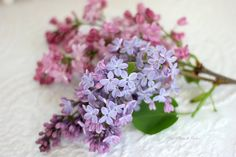 Aiken House & Gardens: Lovely Lilacs