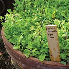 How to grow greens fast