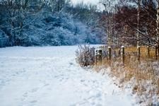 Sheffield Snow (anonymous)