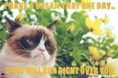 Another Grumpy Cat meme by the other grumpykat