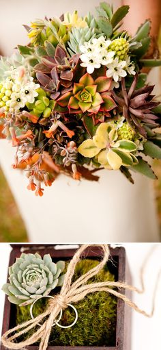 Cool very textured succulent bouquet and ring bearer idea!