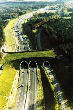 Wildlife Bridges allow animals to cross highways safely and cuts down on collisions with cars.