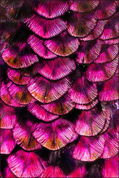 See what is inspiring us to create sustainable surf inspired fashion, surfbikinis & surfwear Feather Texture, Pink Texture, Magenta, Purple, Textures Patterns, Color Patterns, Creative Inspiration, Color Inspiration, Everything Pink