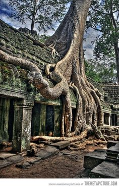 Tree growing on top of a Cambodian temple silreb