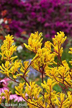 39 Best Mediterranean Plant Palette Images Mediterranean Plants