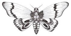 papillon nuit dessin - Recherche Google
