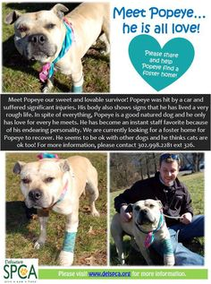 Popeye - a survivor who needs a home