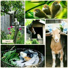 Cute animals#moodboard #mosaic #collage #inspirationboard #byTanja♡