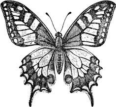 3. Niet, teveel in vier gedeeld Old World Swallowtail Butterfly | ClipArt ETC
