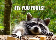 Fly you fools!