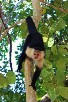 1 BR villa for sale at organic farm in Costa Rica. Wake up to monkeys!