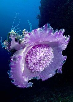 Discover Your World / Under The Sea Purple Jellyfish