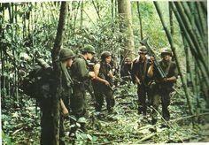 Patrol through bamboo jungle