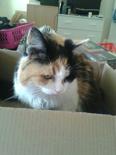 Yep..pack my toys in this box for the move..