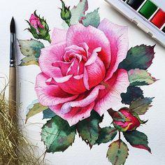 Samira YanushkovaさんはInstagramを利用しています:「Рисуя и рассматривая розу в деталях понимаешь почему ее считают Королевой цветов  С помощью роз можно многое сказать, они дарят…」