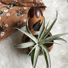 The most adorable little gourd planter! Perfect for an air plant.