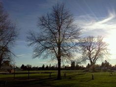 February in Memorial Park, Ladner BC