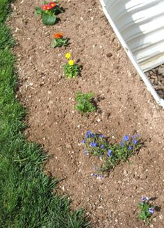 """For our """"Bailey"""" garden, a flower """"rainbow"""" to represent the rainbow bridge in the pet loss poem"""