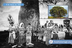 8 de marzo de 1955: decretan que la Ceiba Pentandra sea el Árbol Nacional – Hoy en la Historia de Guatemala United Fruit Company, The Unit, La Ceiba, Jungles, Castles