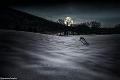Deer/Moon