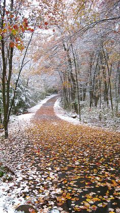 Autumn snow in CT. by Walks Across, via Flickr