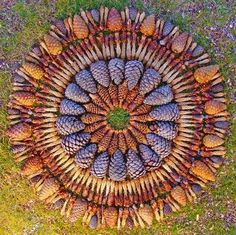 Print of a mandala art installation by Kathy Klein, who creates mandalas with flowers and pincones