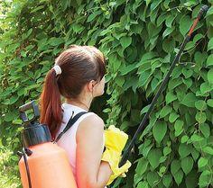 Česnekový olej zahubí mšice, ale slunéčku neublíží Watering Can, Vegetable Garden, Succulents, Water Bottle, Pergola, Home And Garden, Gardening, Ideas, Gardens