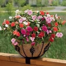 The Antoinette Planter adds warmth to outdoor decorating, which makes an inviting case for staying home and enjoying the refuge of your backyard. Deck Railing Planters, Deck Railings, Outdoor Planters, Outdoor Gardens, Flower Puns, Planters For Sale, Small Patio, Planter Boxes, Container Gardening