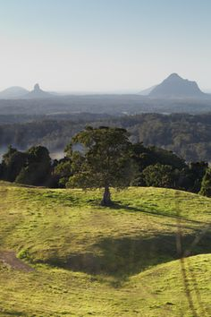 View from Maleny to Glass House Mountains. The Glass House Mountains are a group of eleven hills that rise abruptly from the coastal plain on the Sunshine Coast, Queensland, Australia. The highest mountain is Mount Beerwah at 556 m above sea level, but the most identifiable of all the mountains is Mount Tibrogargan which appears like a giant ape sitting by the roadside staring out to sea. The mountains were named by explorer Captain James Cook on 17 May 1770.