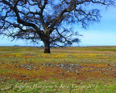 Table Mountain Spring Landscape 8x10 Print by LedByLight on Etsy