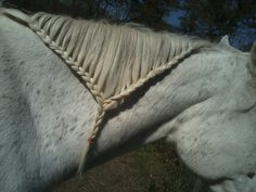 braids braids and more braids, braided my horses hair!