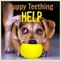 help puppies teething