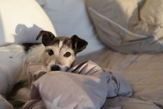 Living room #home #decor #dog http://skiglari-norppa.blogspot.com